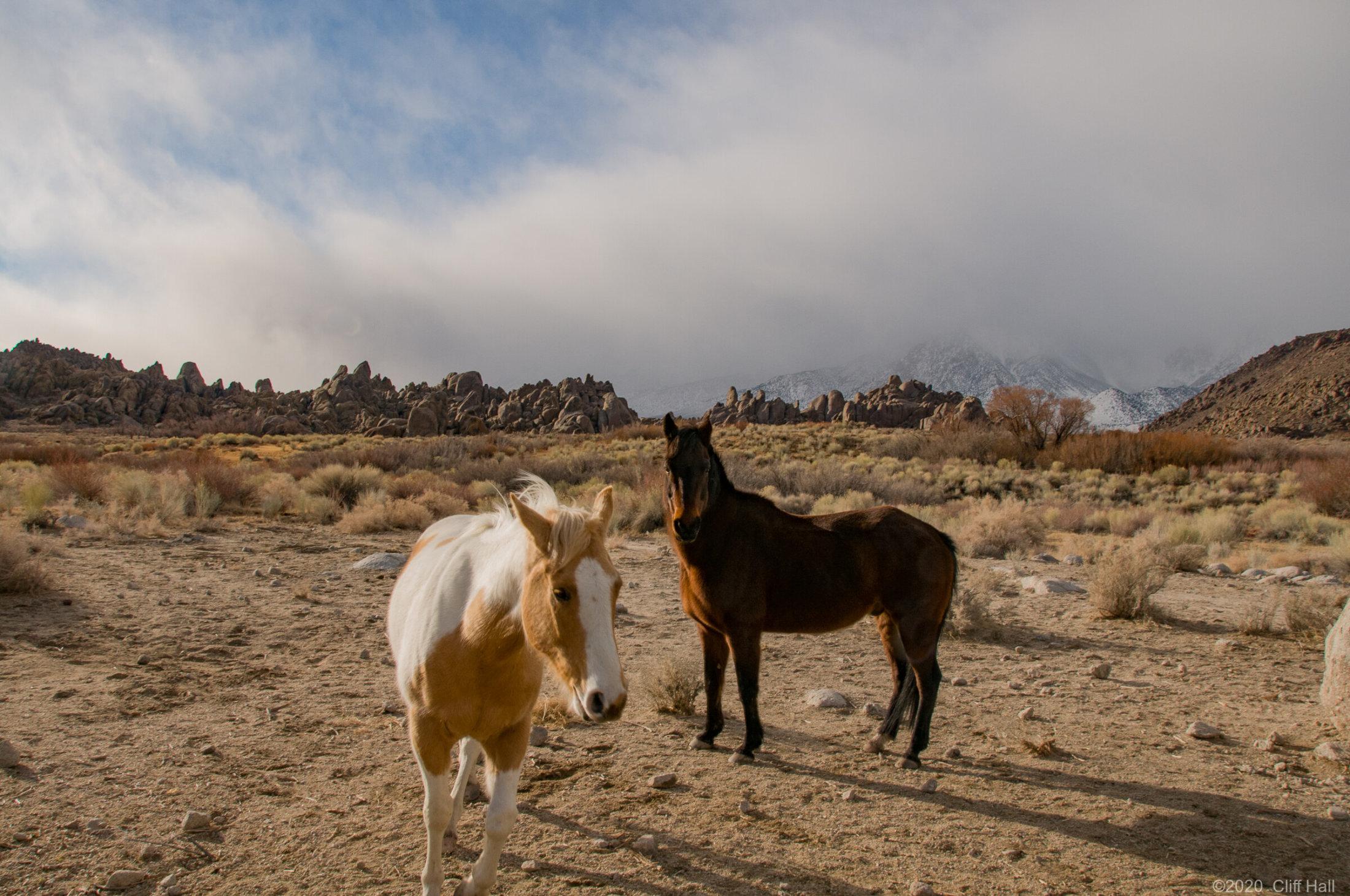 Curious horses in Alabama Hils, CA