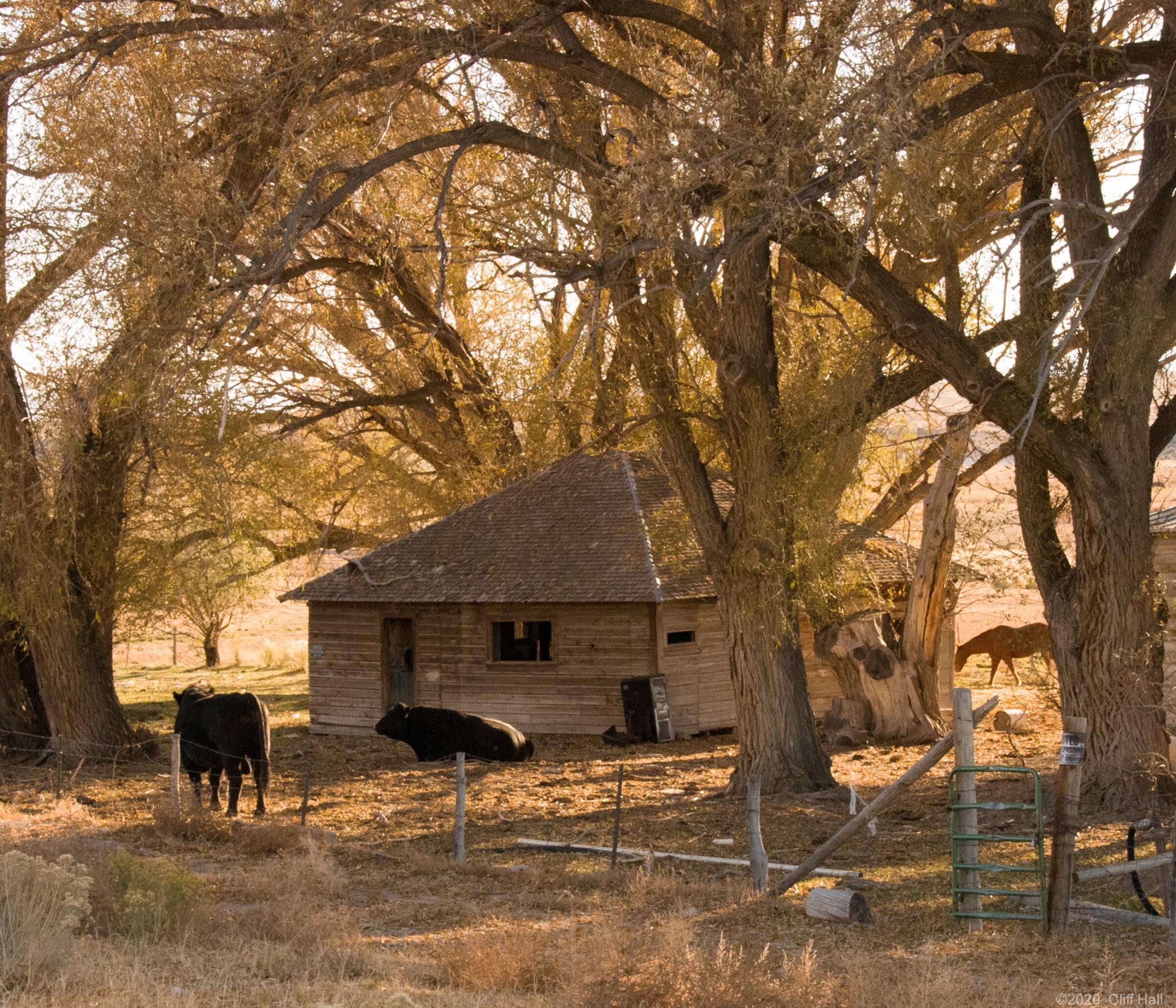 Little Animal House on the Prairie