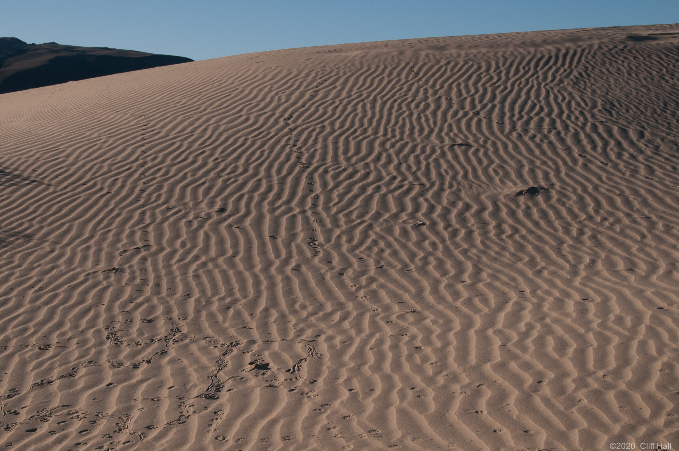 Intricate patterns on the dunes