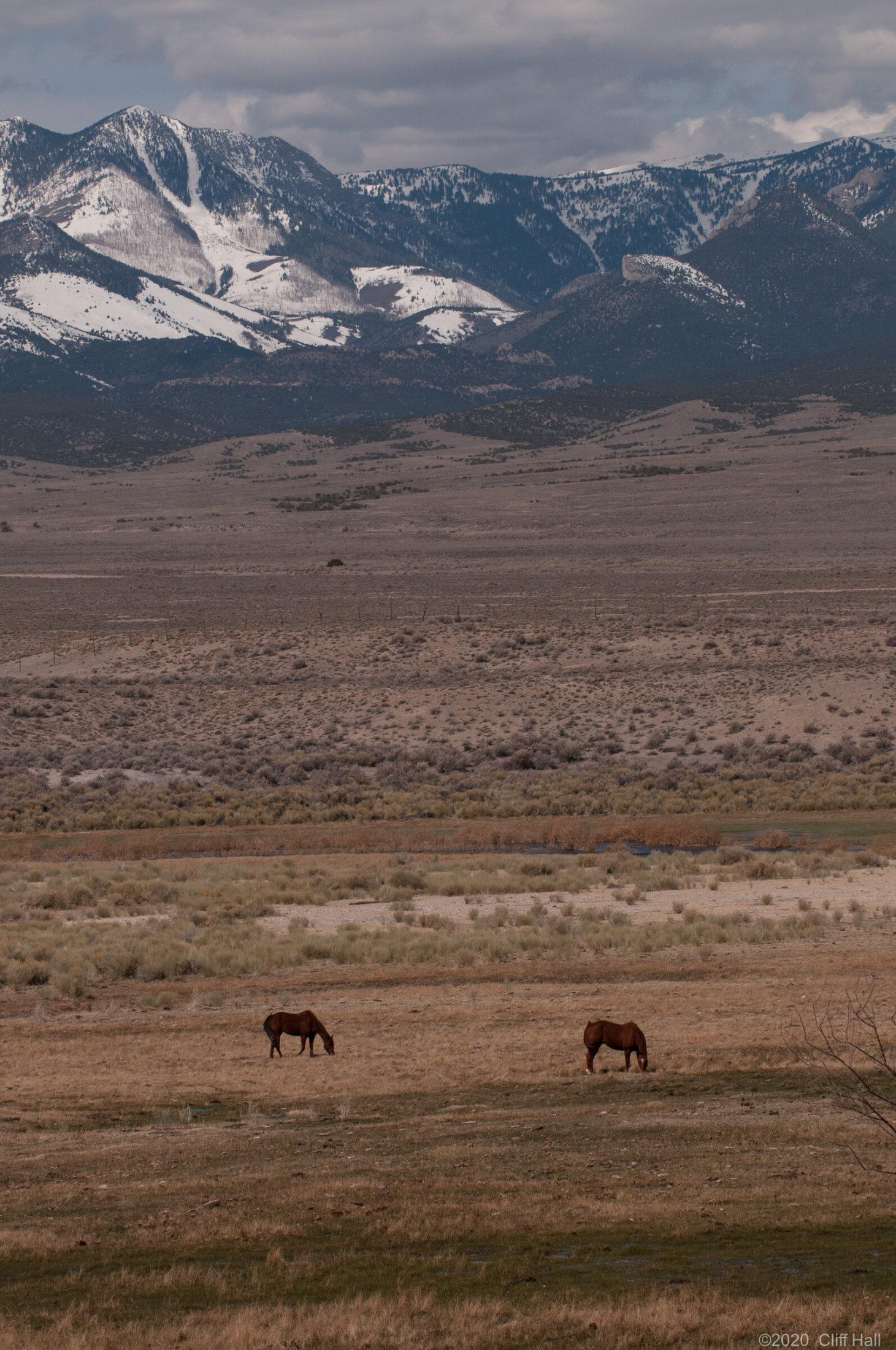 Horses along US-50, NV