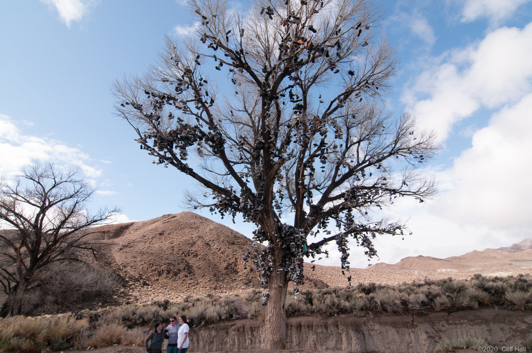 US-50 Shoe Tree, NV