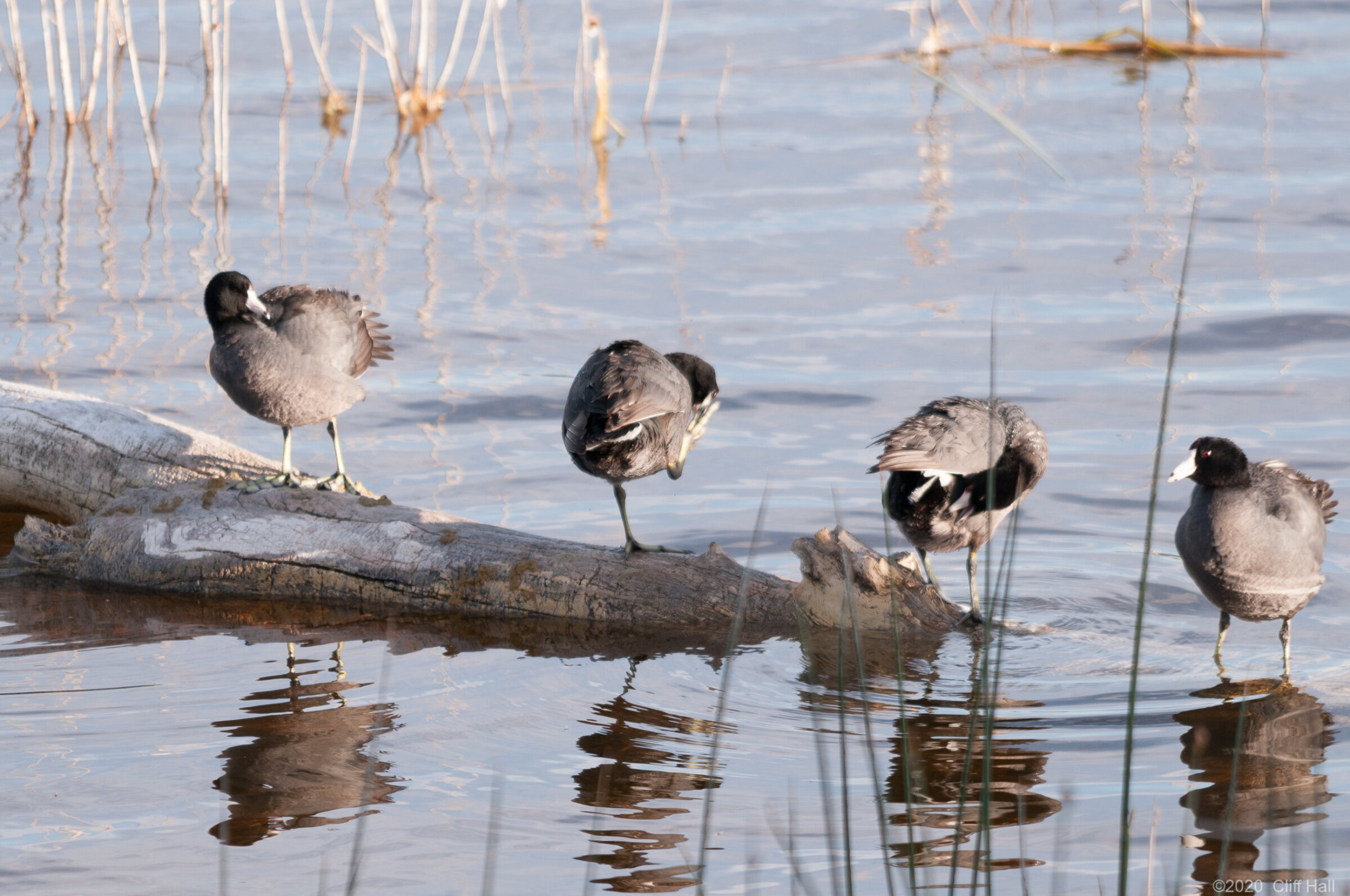 Some Coots, NV