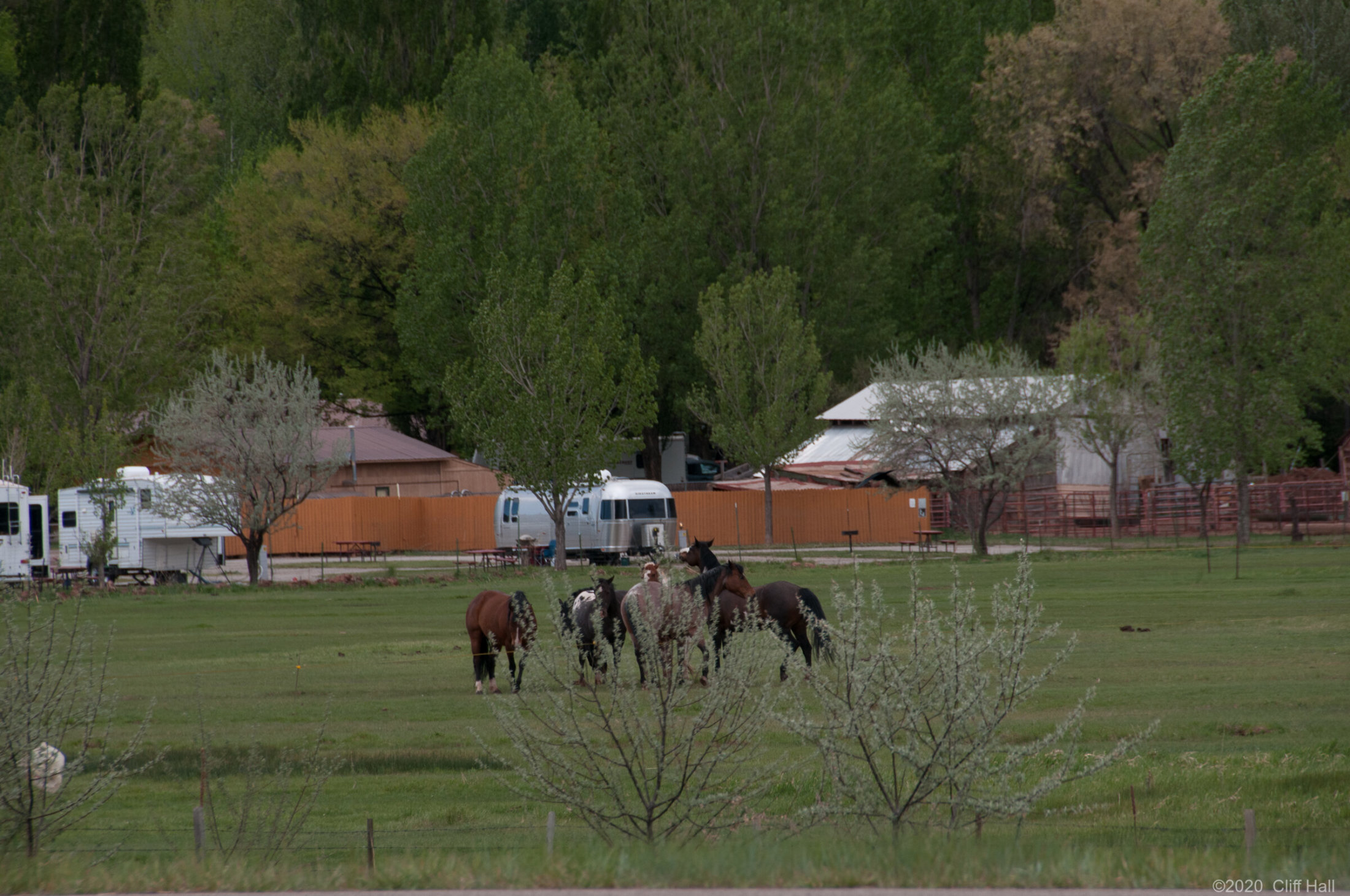 Viewing horses from the iron horse