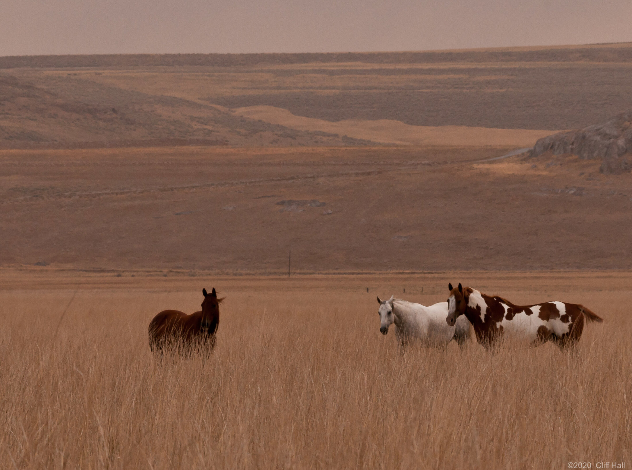 Horses in tall grass
