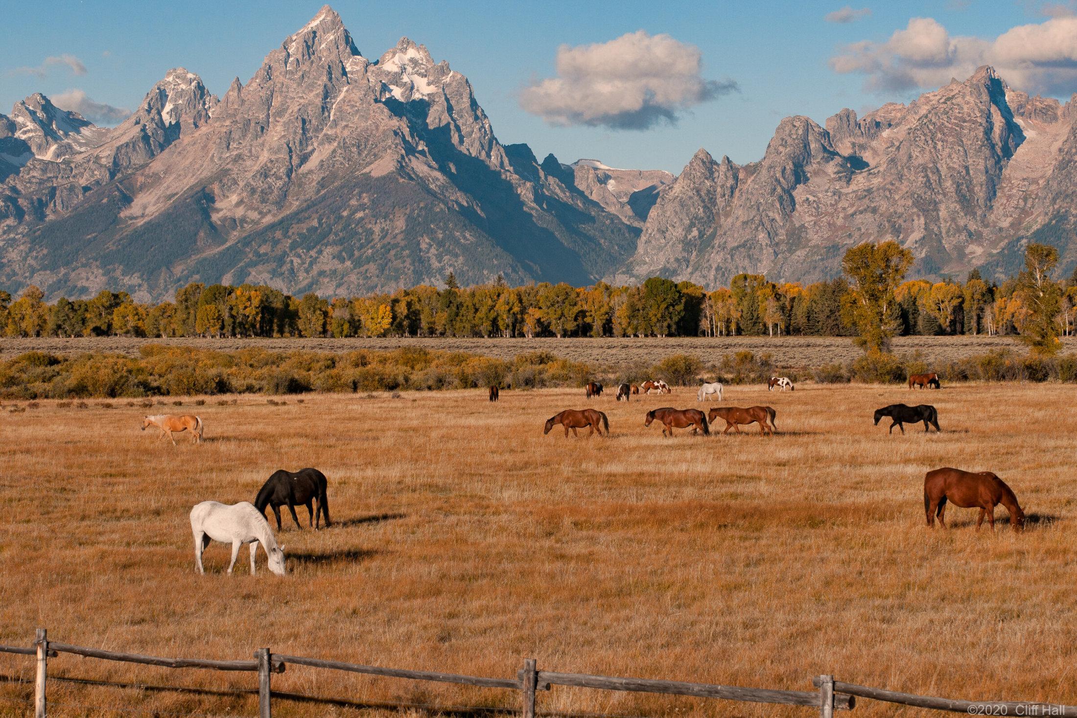 Horses with Teton backdrop