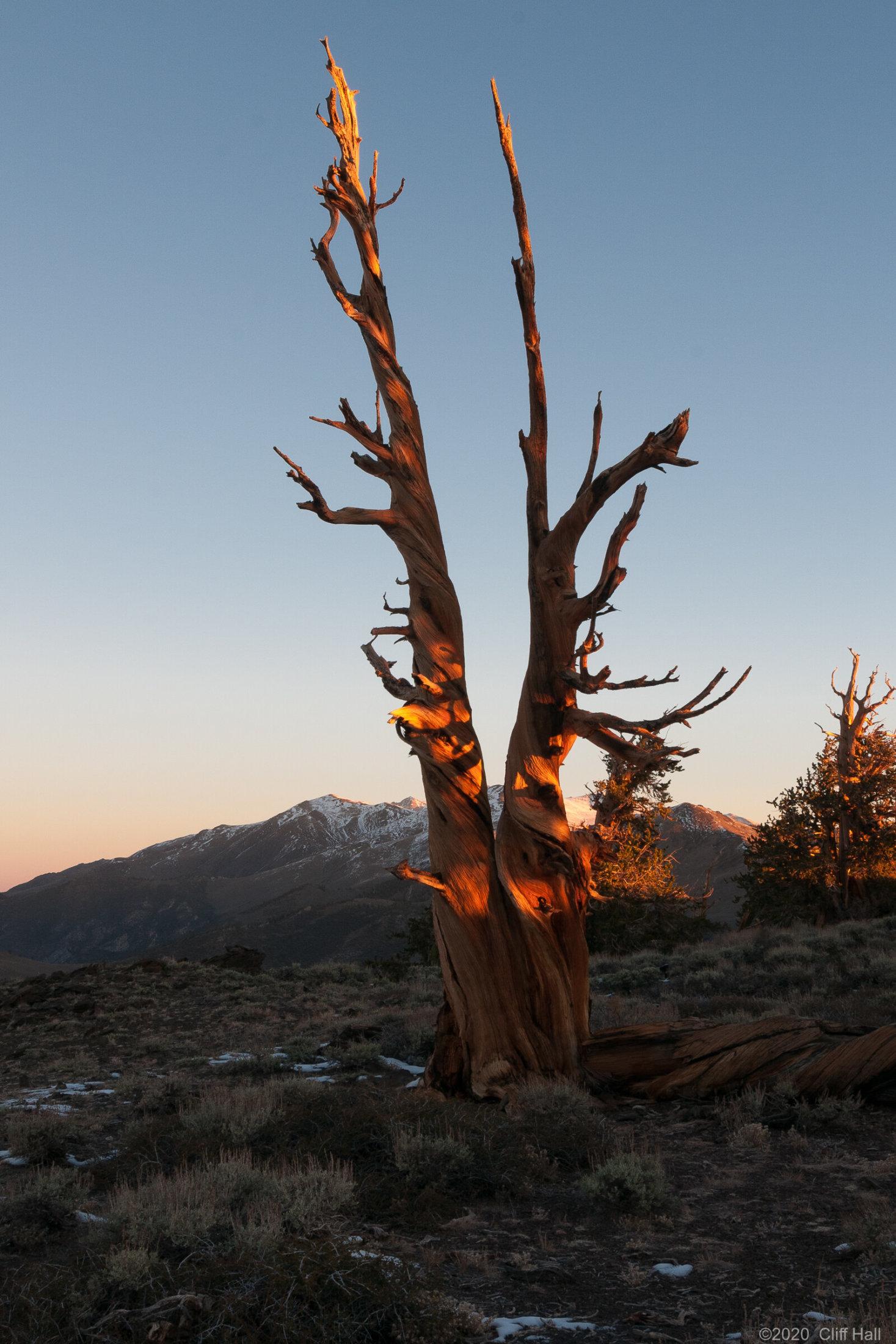Sunrise on White Mountain