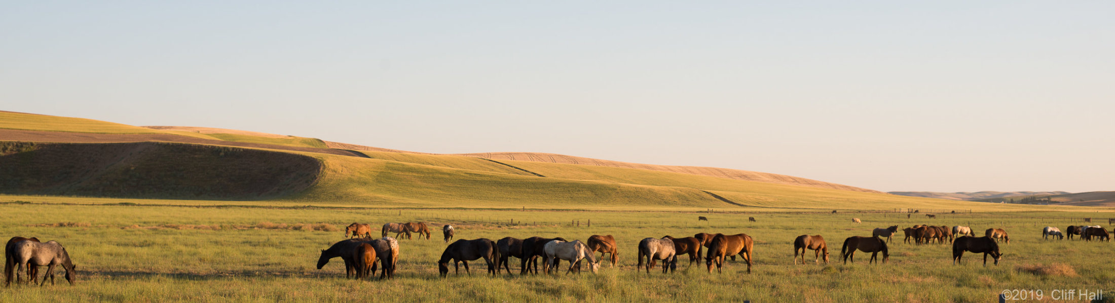 Horses in Palouse Region, WA