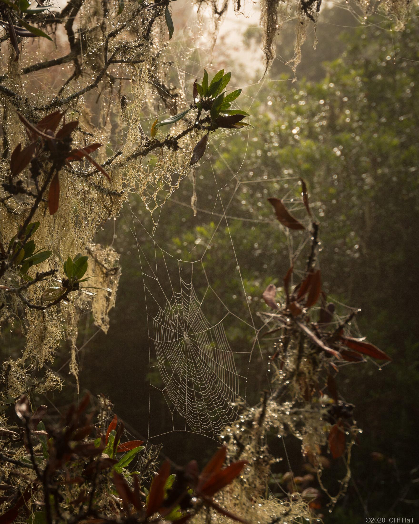 Web on a dewy morning