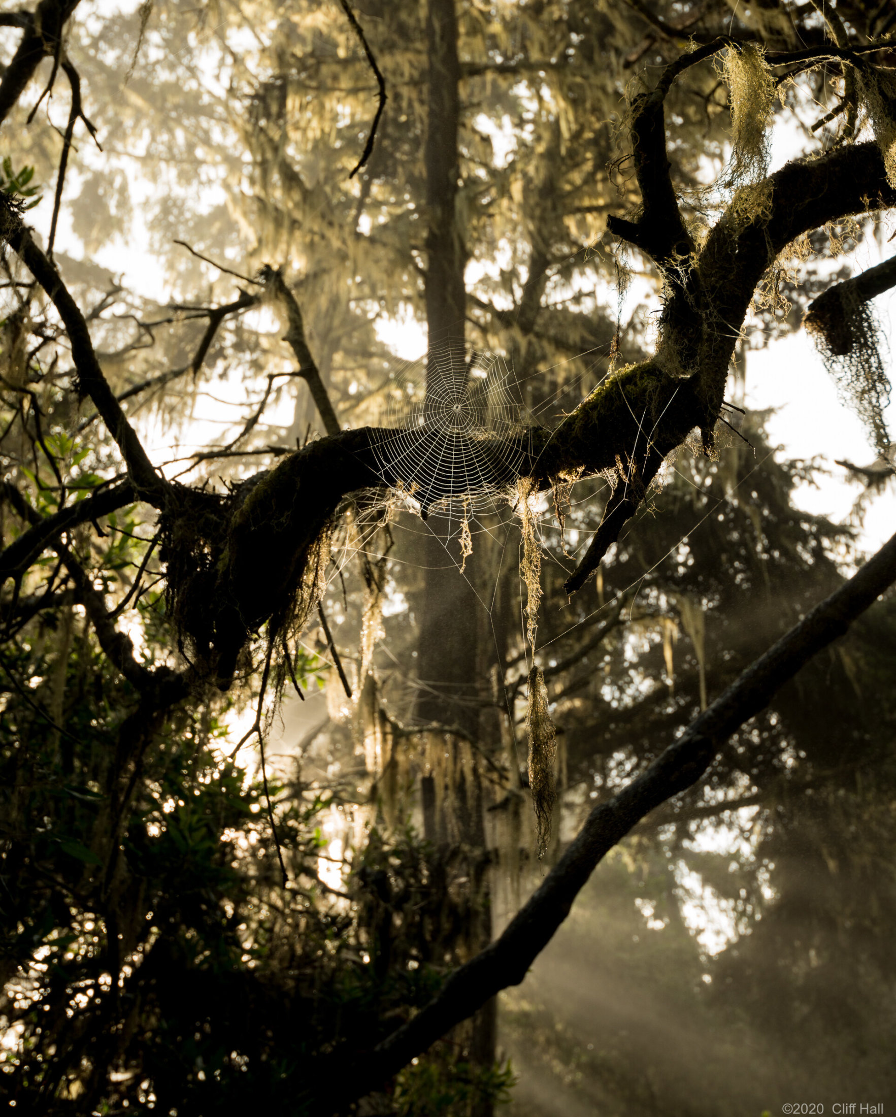 Web in the mist