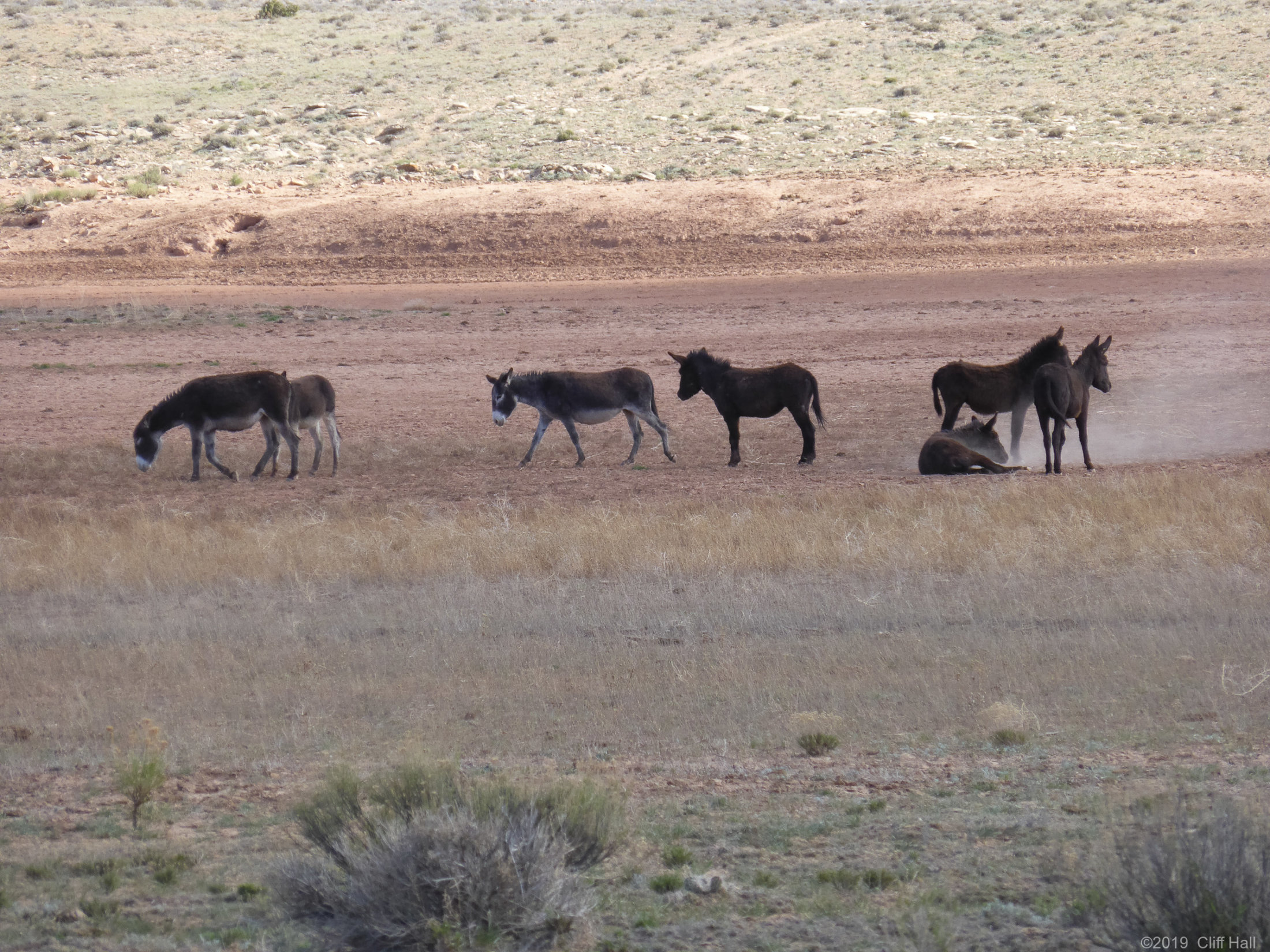 Wild Donkeys in the Swell