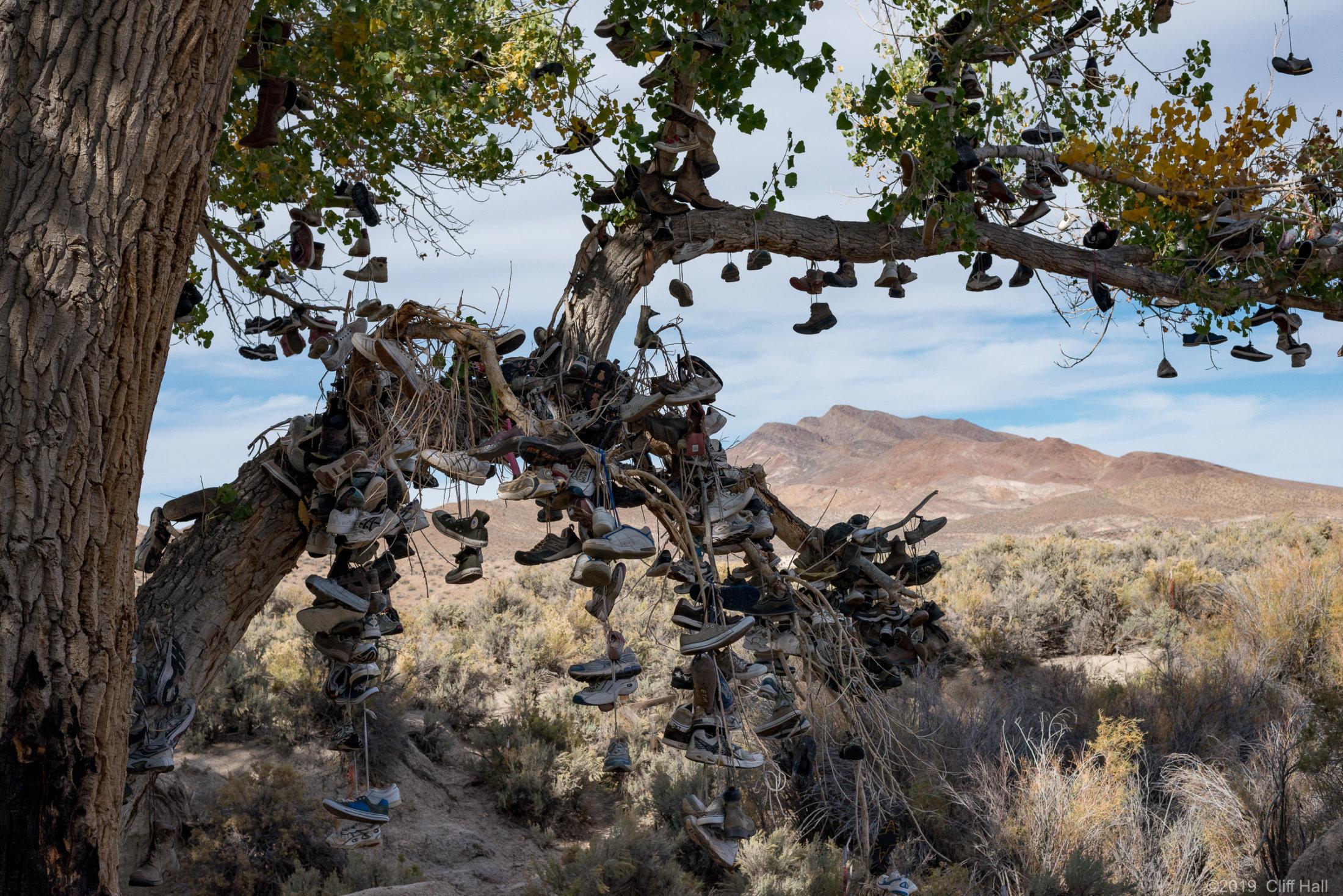 The US-50 Shoe Tree, NV
