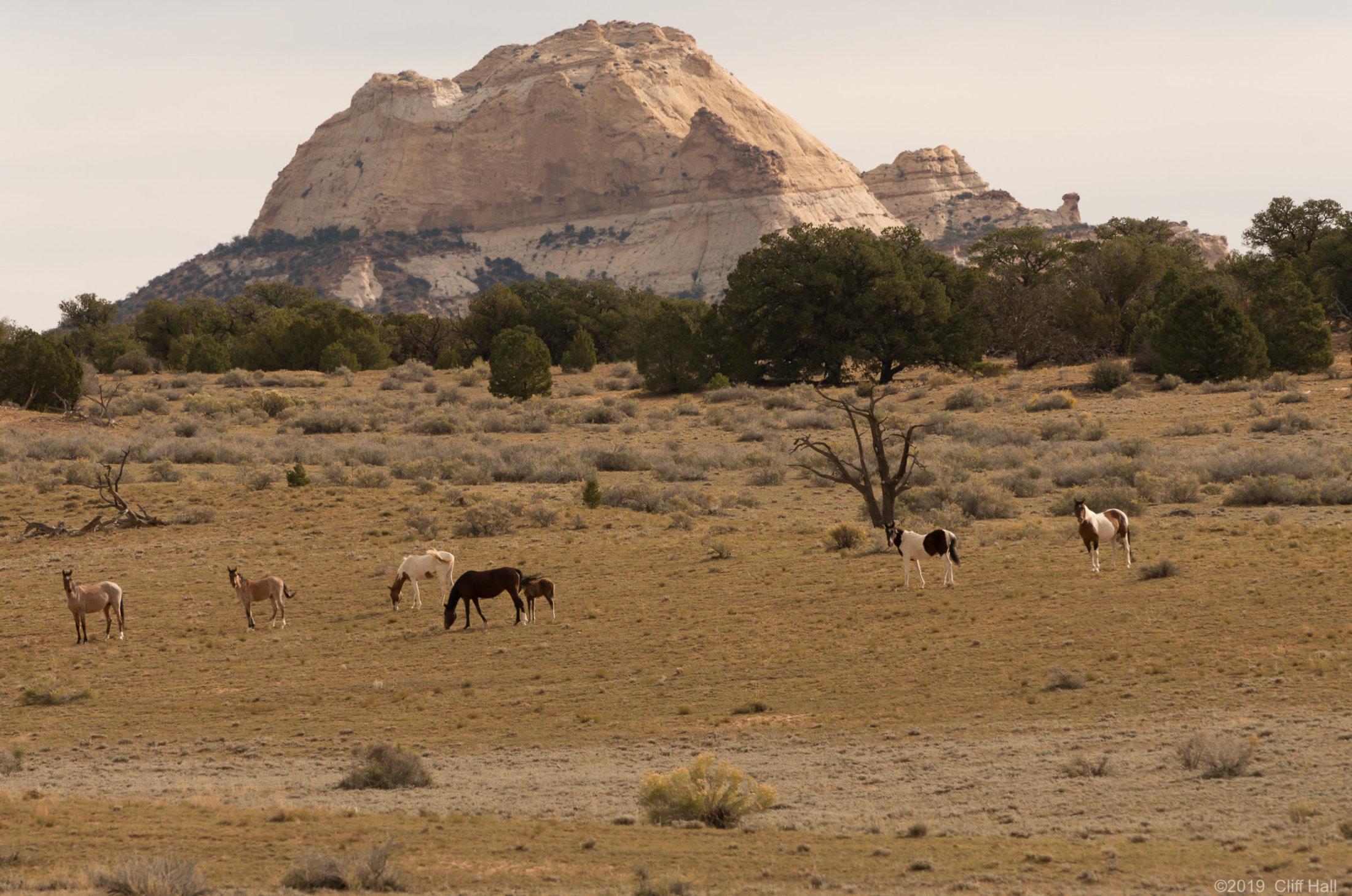 Swell wild horses