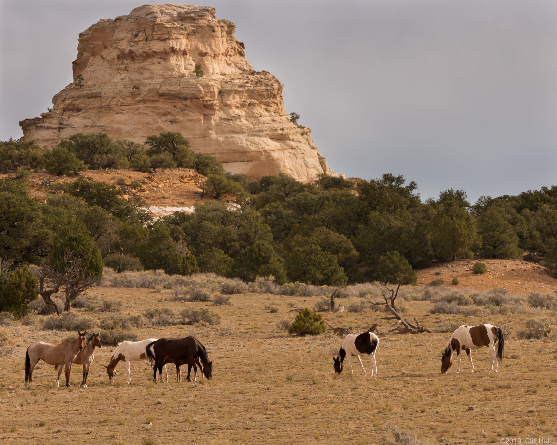 Wild Mustangs out West