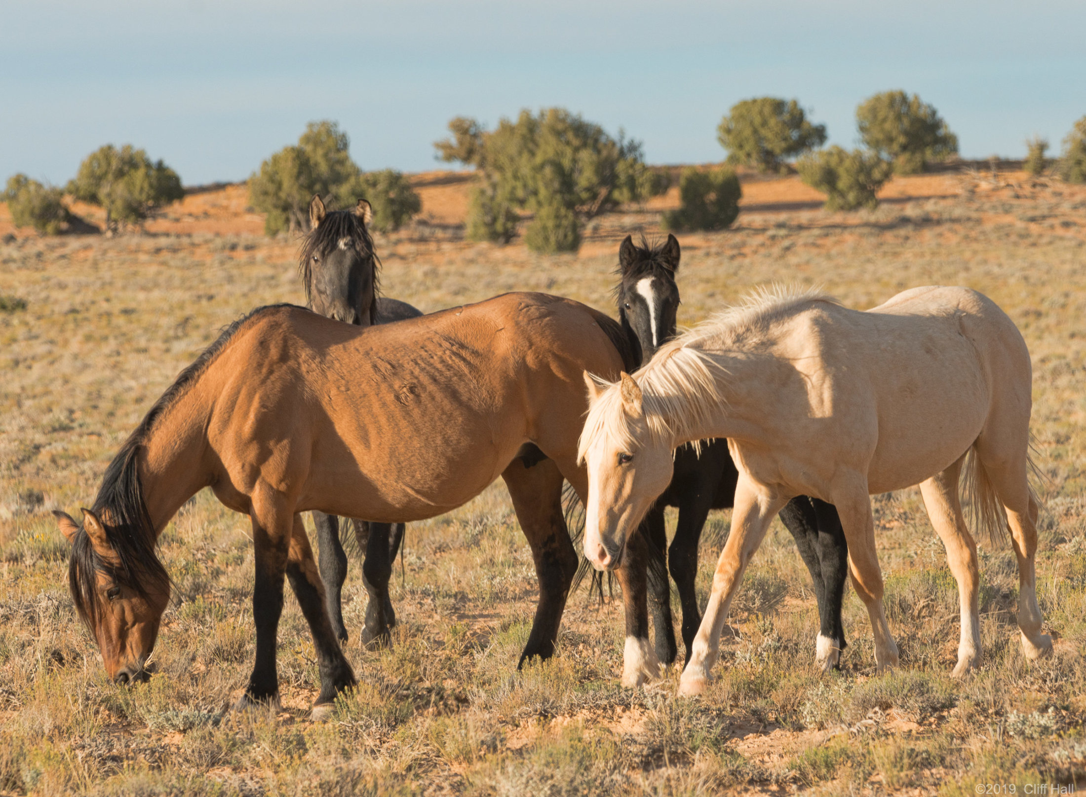 Wild Horses, wary of people