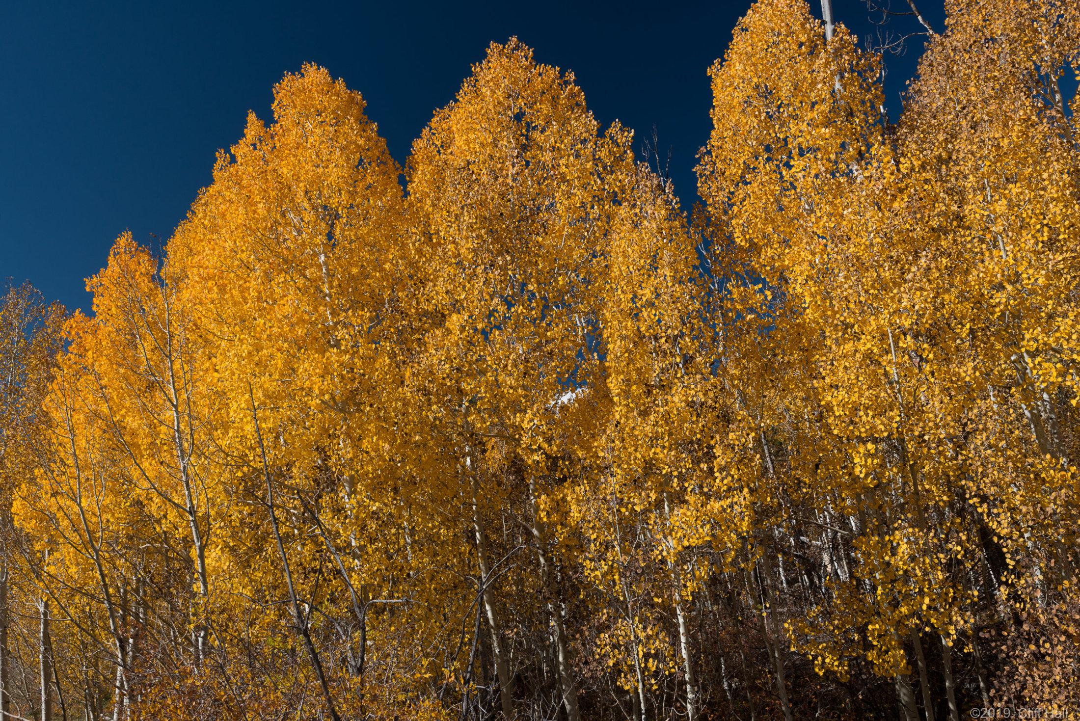 Boulder Mountain Fall Colors, UT