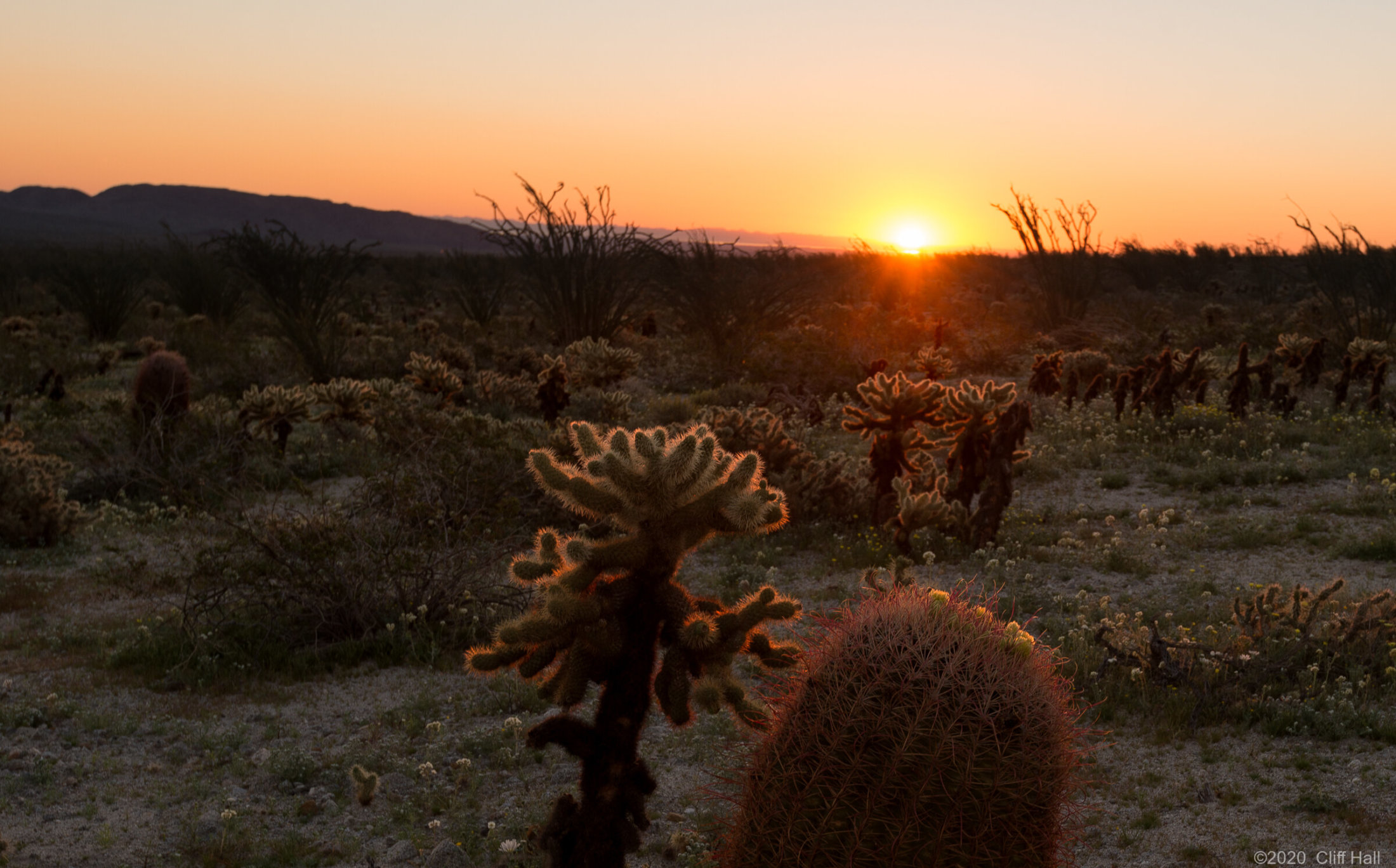 Sunrise on Cholla