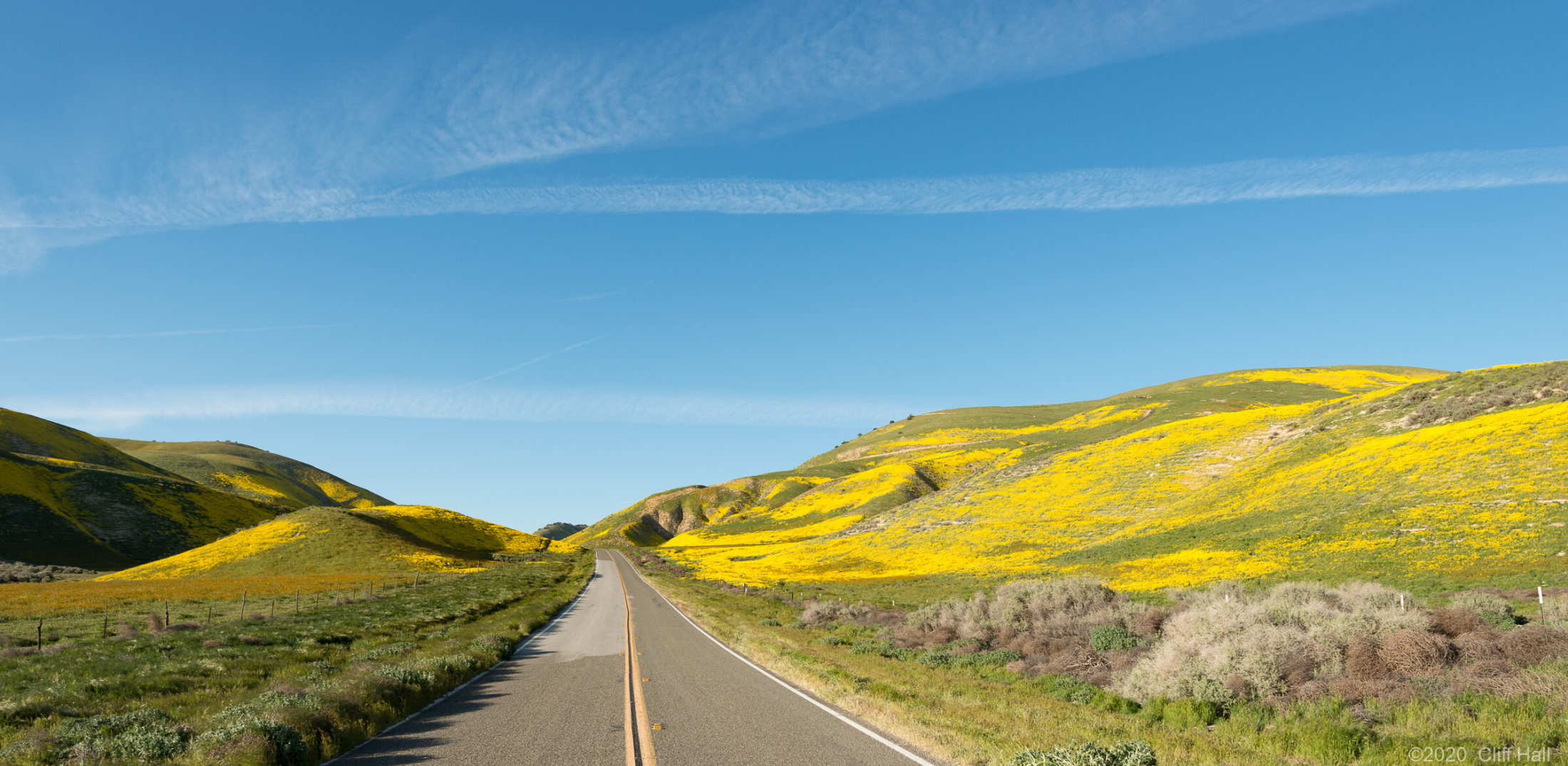 The Yellow Flower Road