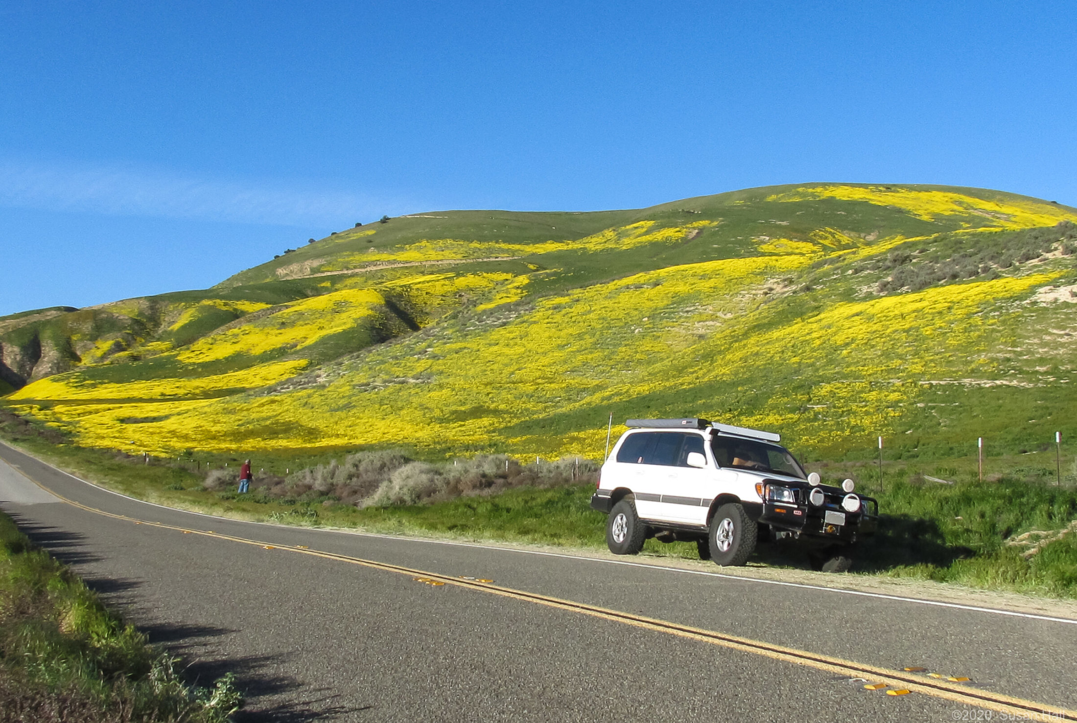 Cliff chasing wildflowers
