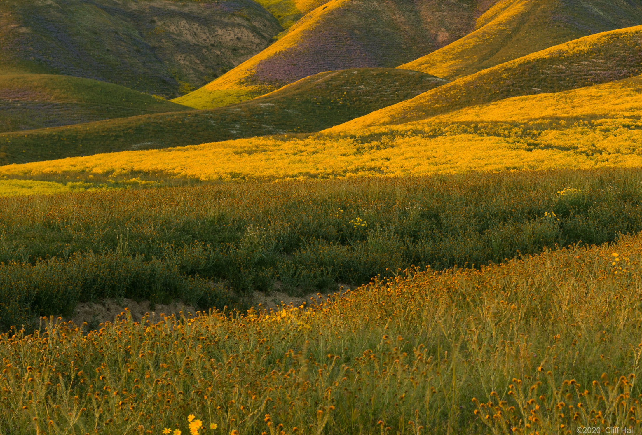 Wildflower for miles and miles