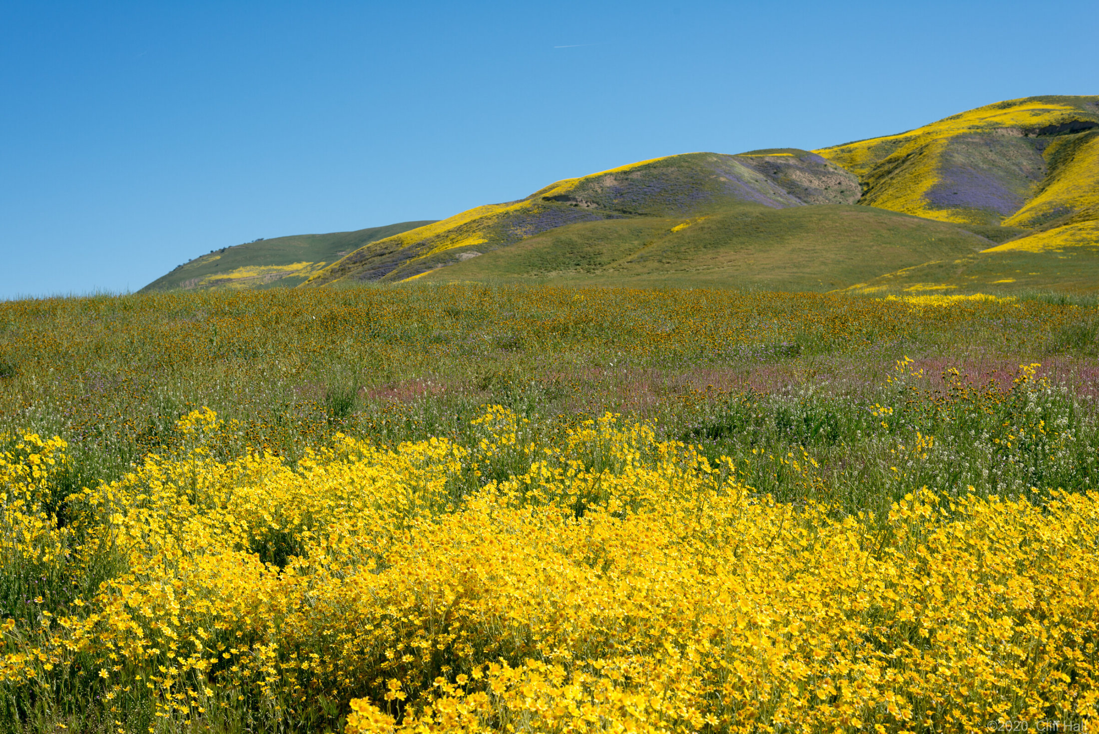 The Hills are alive with Color