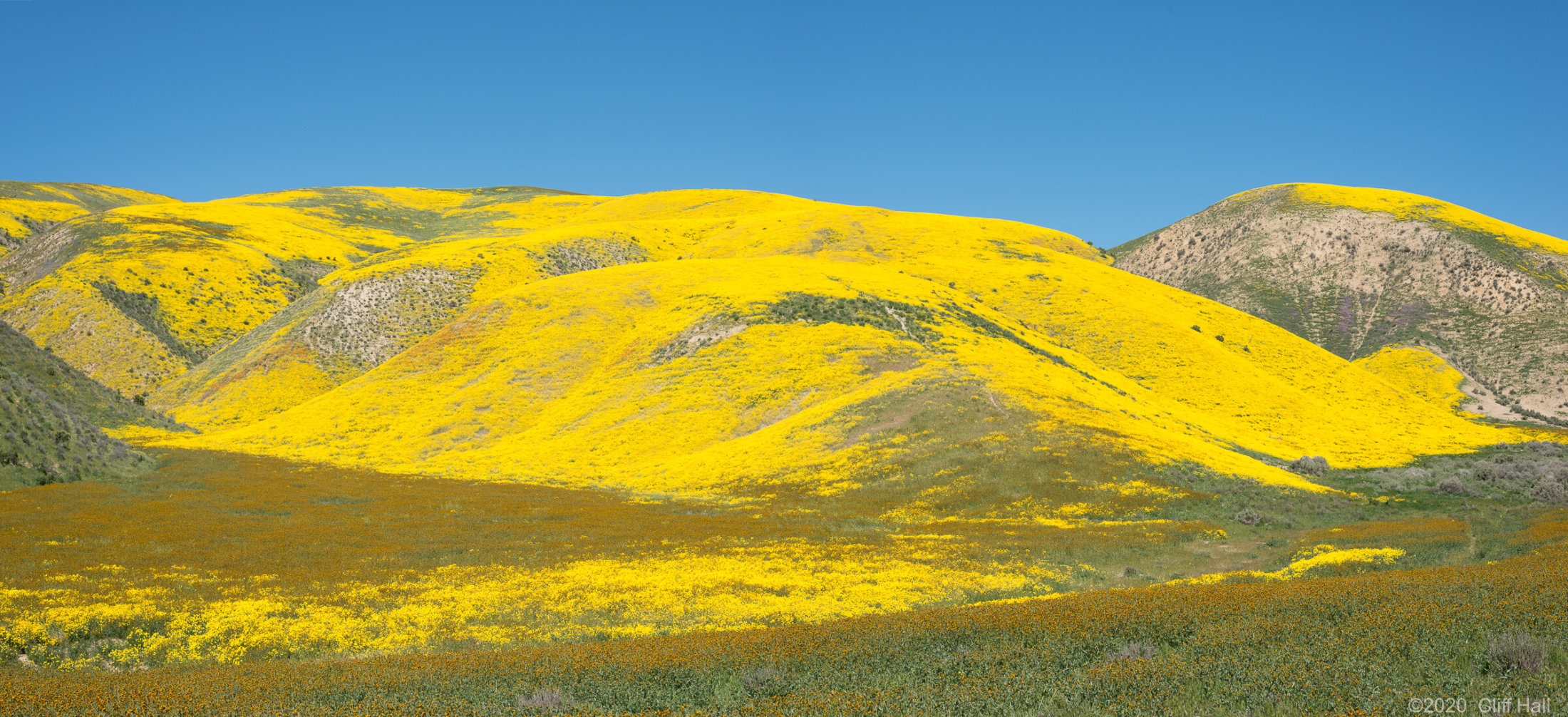 If you like yellow, this is the place