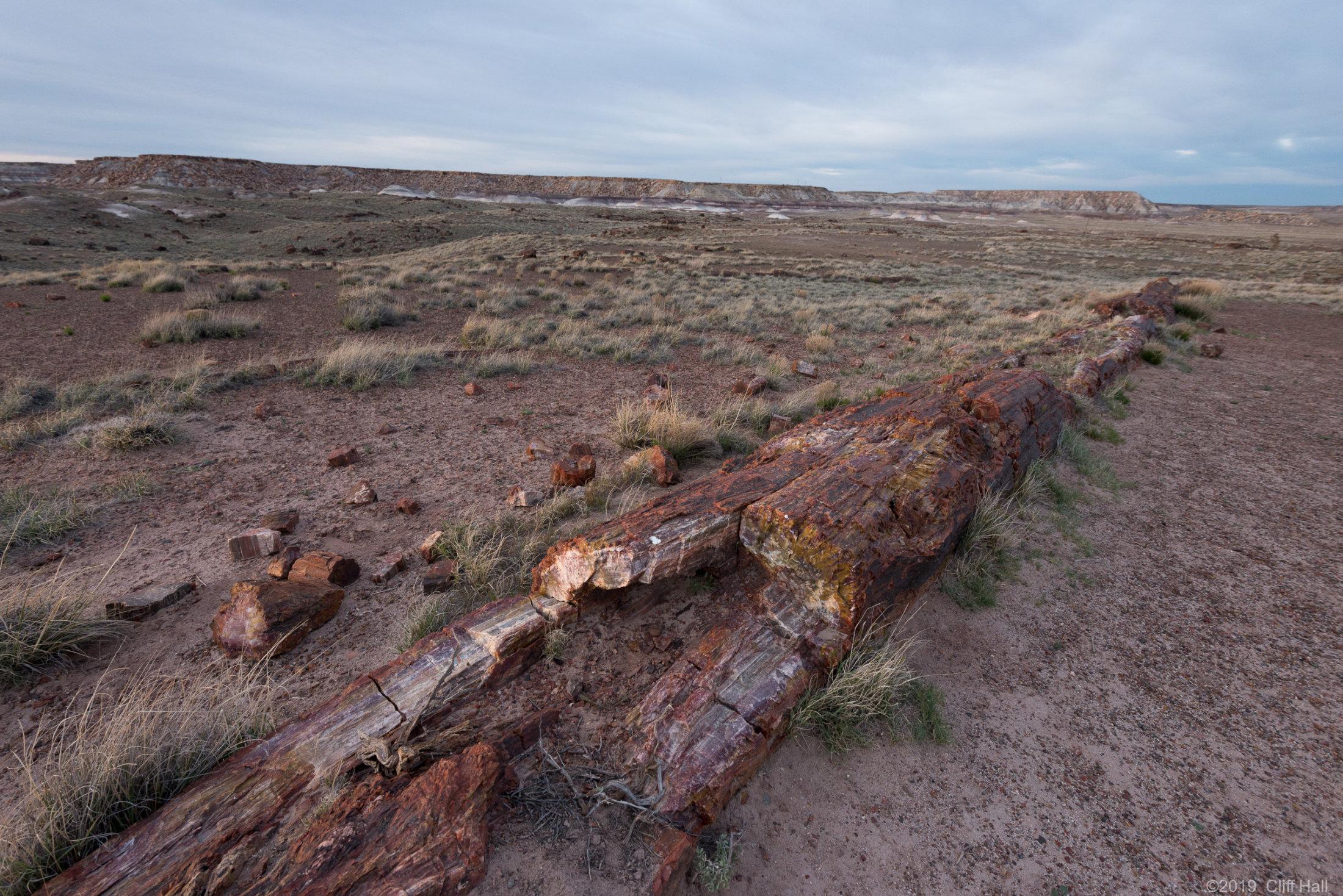 Triassic tree trunk