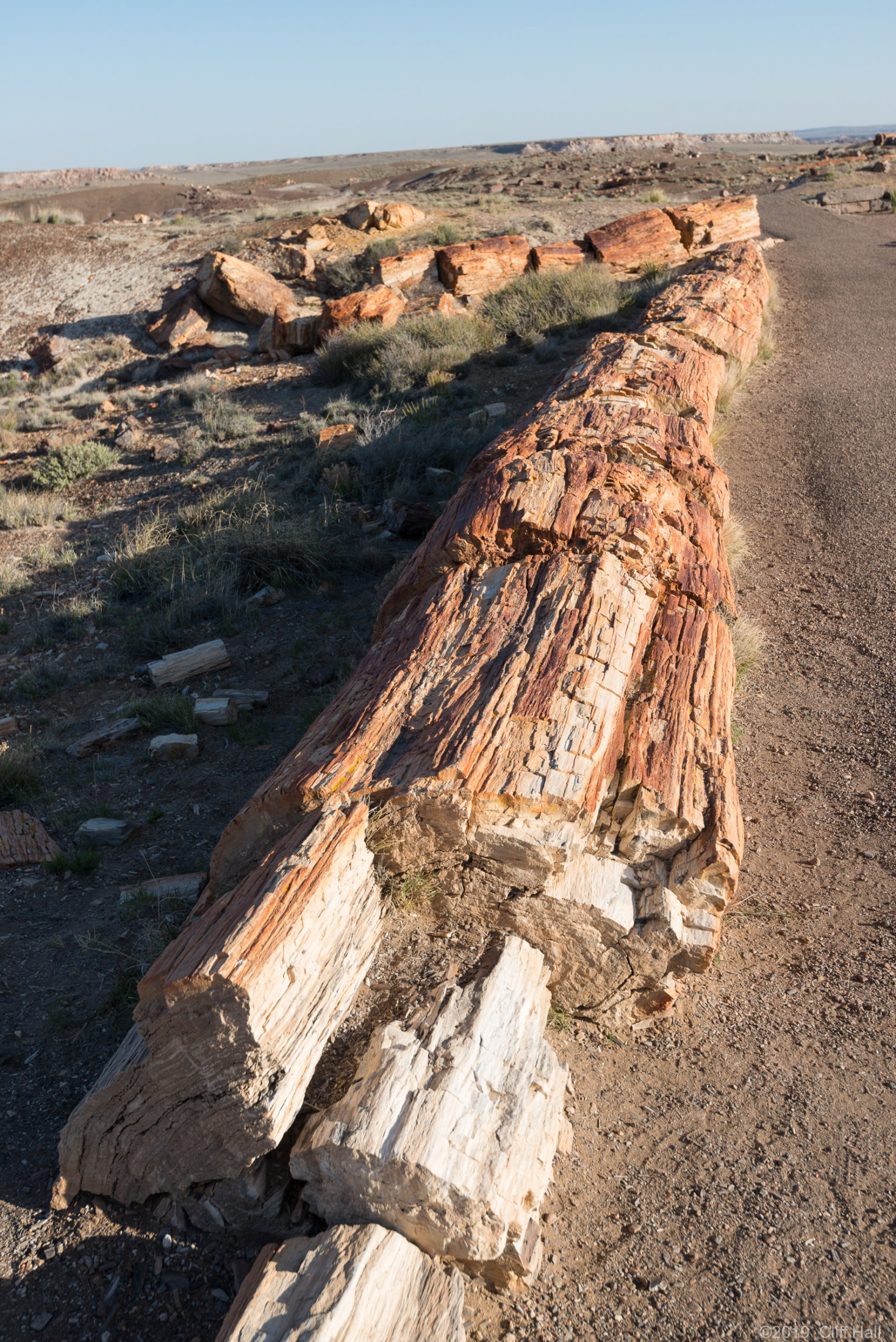 Triassic tree trunk