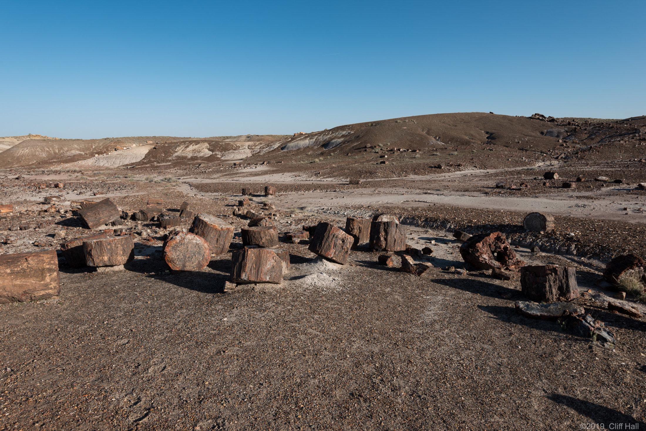 225 million year old firewood