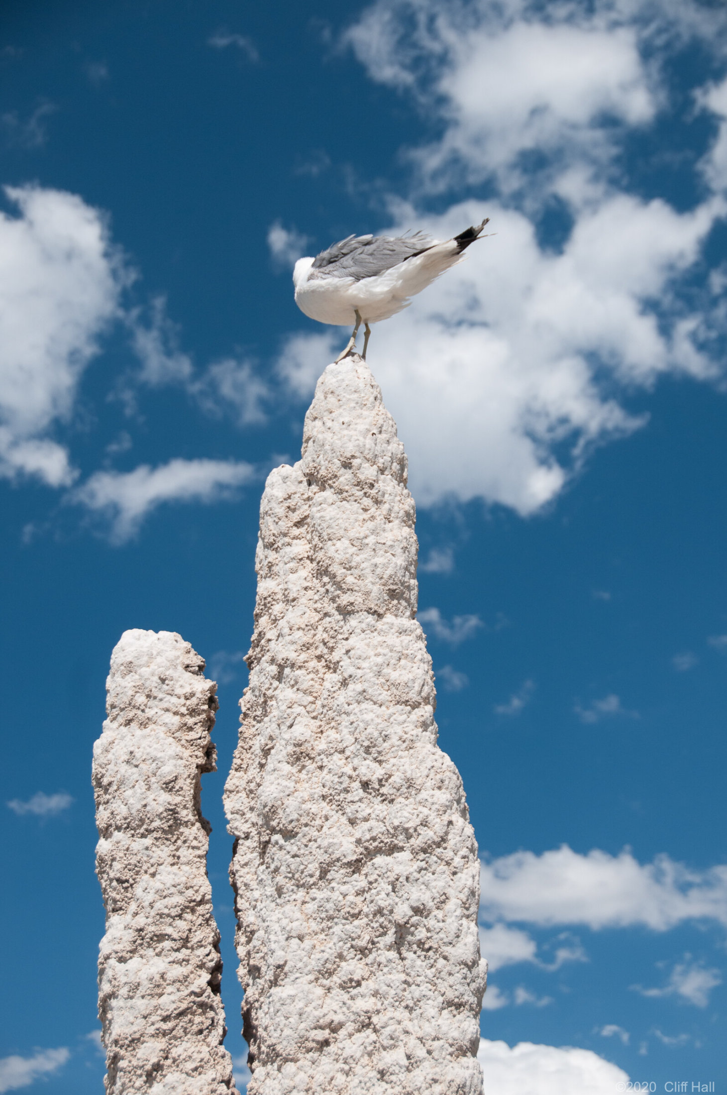 Tufa Seagull
