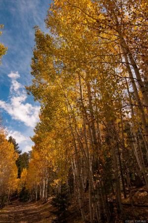 Fall on Boulder Mountain, UT