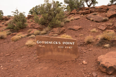 Goosenecks Point