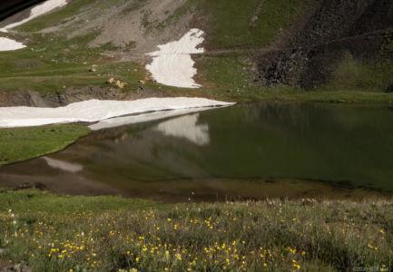 Alpine Spring, wildflowers and snow